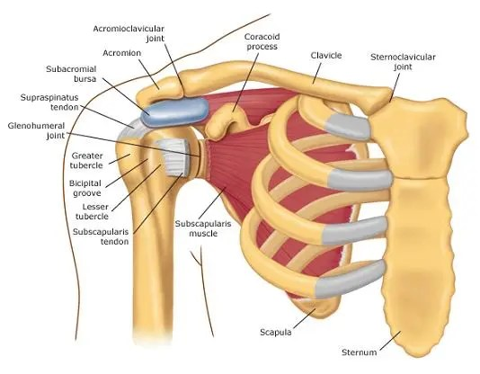Rheumatoid Arthritis And Shoulder Arthritis My Latest X Rays