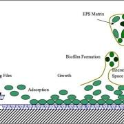 Biofilm_Formation