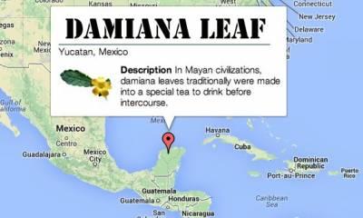 natural aphrodisiacs: Damiana Leaf