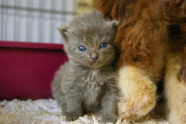 SOS Animals/Flickr