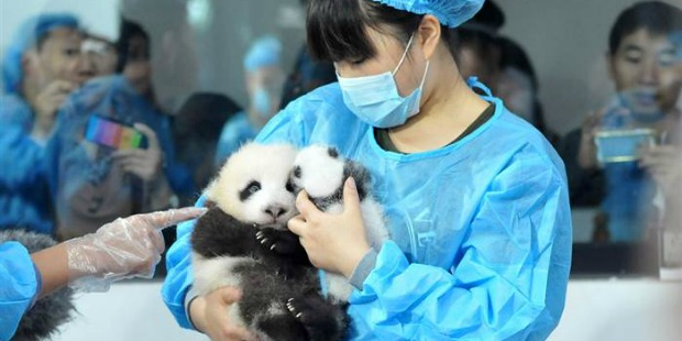Best Jobs Ever – Panda Cuddling, Sloth Bather, etc.