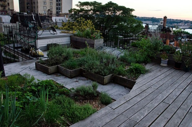 Photo of rooftop garden