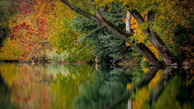 autumn leaves Pixabay