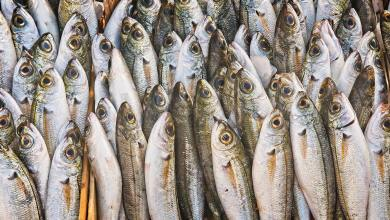 Photo of Farm-Raised VS Wild-Caught: Which Fish Is The Better Choice For You?