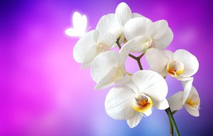 Online Orchids Flowers Delivery-MyFlowerTree