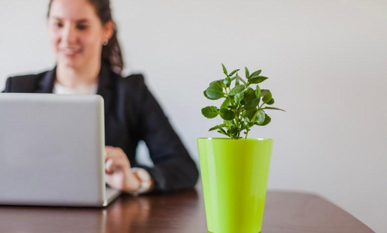 Buy Indoor Plants Online