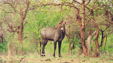 Photo of How is Sasan Gir Forest?