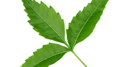 Photo of benefits of neem leaves