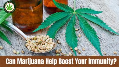 Photo of Can Marijuana Help Boost Your Immunity?