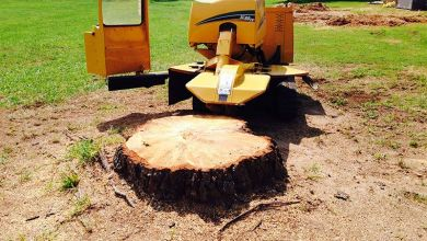 Photo of Why Hire Professionals for Tree Stump Removal?