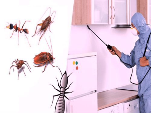 Pest control services in airoli are beneficial to people