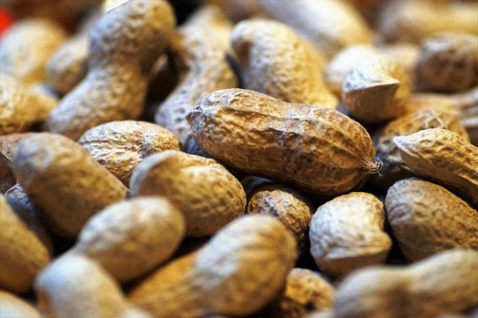 How to Start A Groundnut Business in Nigeria