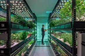 vertical farmingplenty.0.jpg