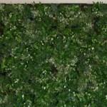 giardino verticale interno