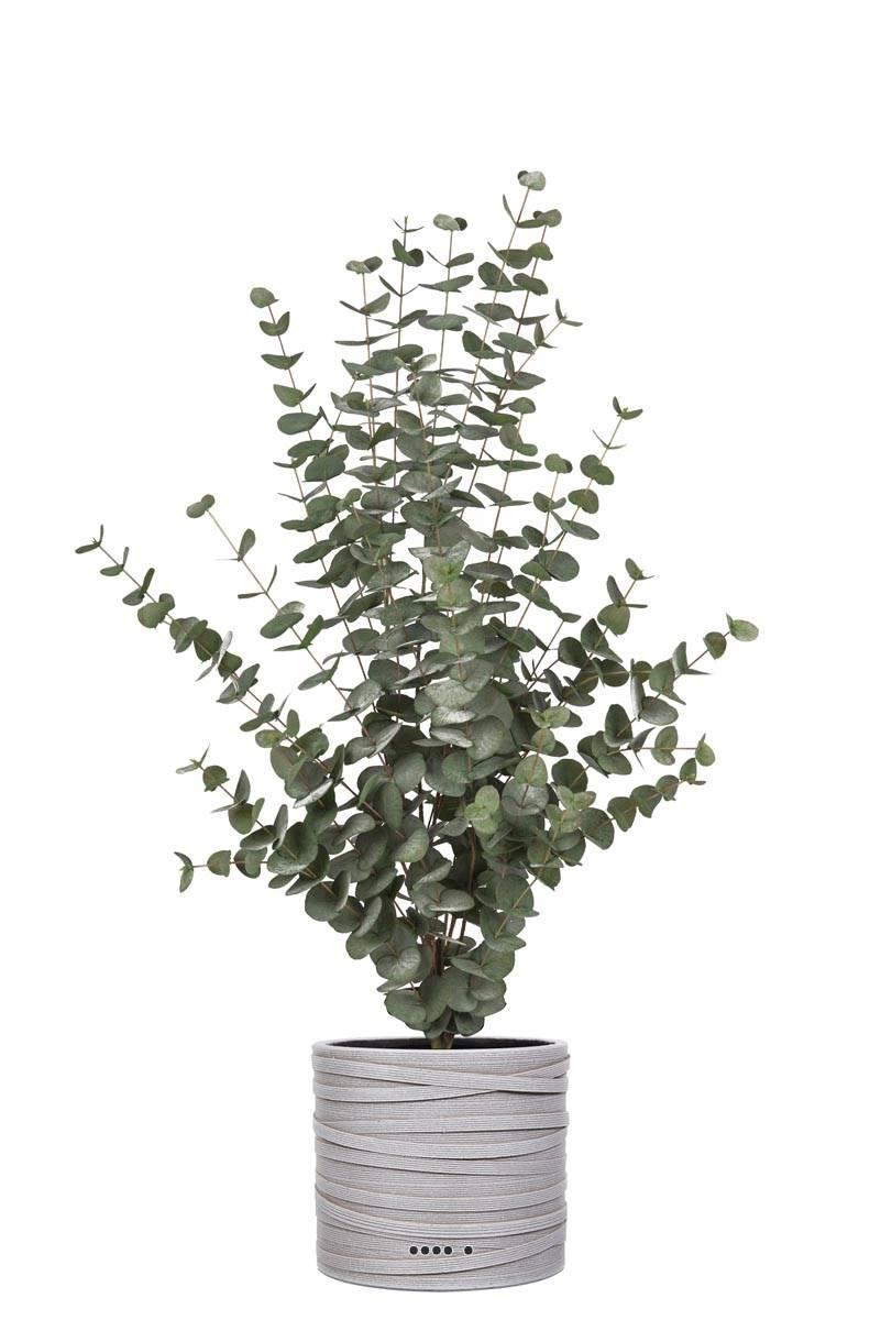 eucalyptus cinerea artificiel en pot h 110 cm d 70 cm dimhaut h 110 cm