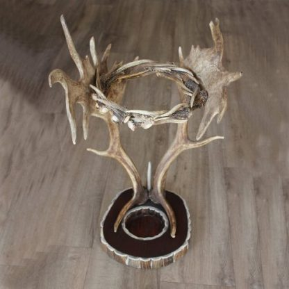 portaombrelli in corno di daino e capriolo con base in legno