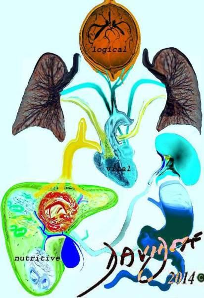 brain-lungs-liver-spleen-stomach-Galen-Hippocrates-humoral-medicine-history-heart-art-anatomy-Davidoff