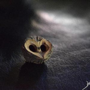 heart shape, heart, Valentine's day, love, romance, heart shape, husk, black walnut tree, owl