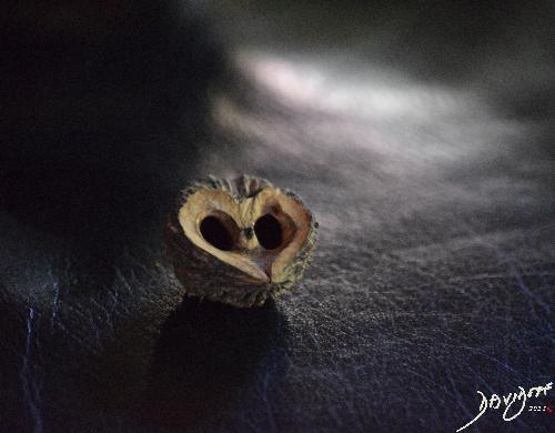 heart0038-catalogue-signed-500-72dpi