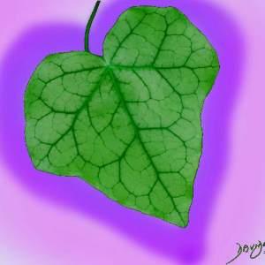 heart, heart shape, ivy, leaf, heart shape, Valentine's day, romance, love,