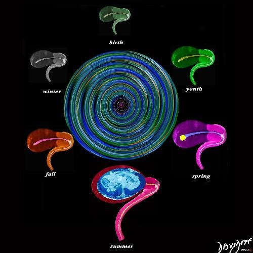 genitourinary tract, genitourinary system, uterus, woman, Art in Anatomy, Ashley Davidoff MD