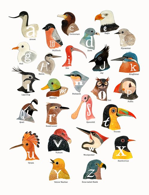 A to Z of birds