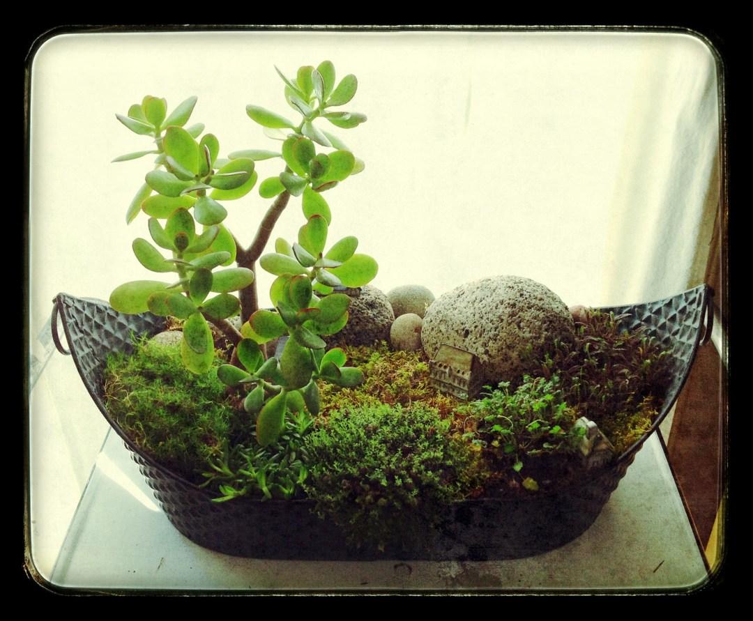 Miniature Gardens.