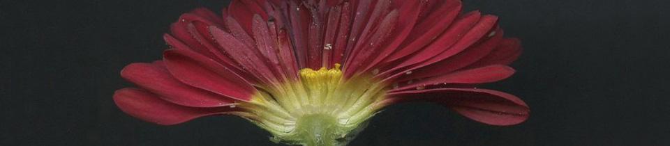 Botanical Observations.