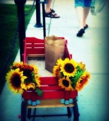 sunflowerprettiness