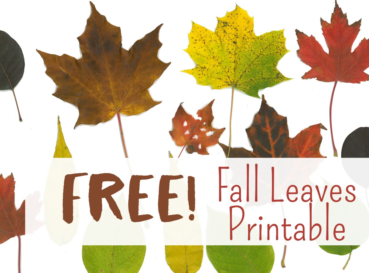 Free Fall Leaf Printables Art