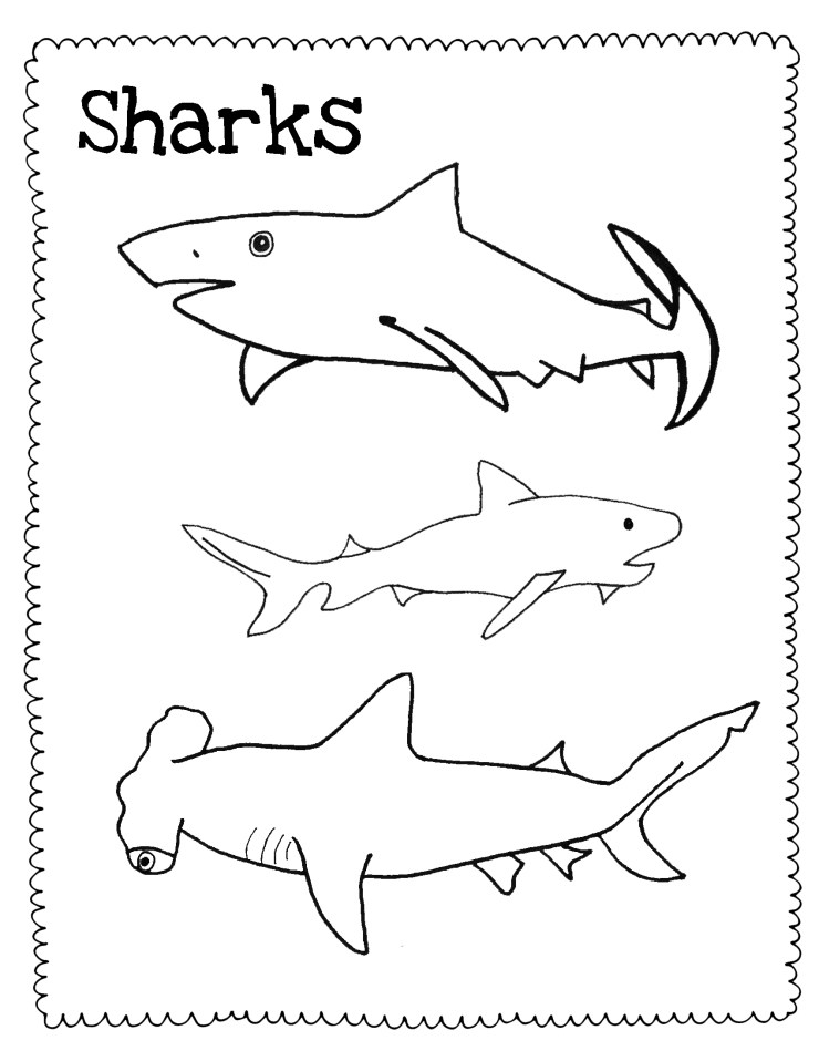 Watercolor Sharks and Free Shark Drawing Guide/Coloring ...