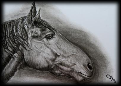 Exemple de cheval noir au fusain
