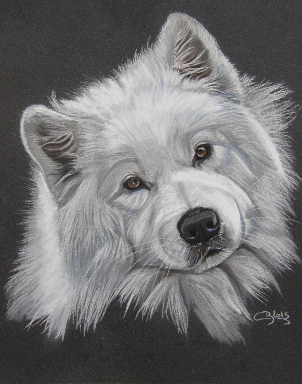 portrait samoyède