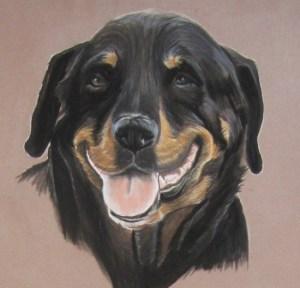 portrait rottweiler