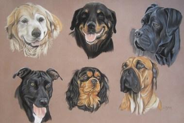 chiens pastels