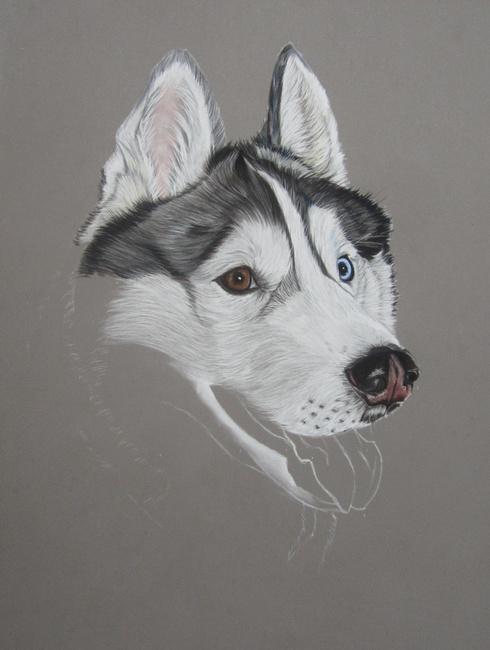 dessiner husky