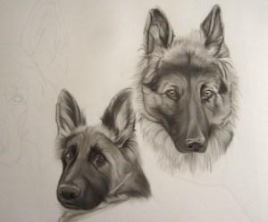 dessin chien