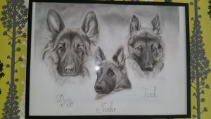 dessin chiens