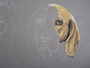 dessin beagle