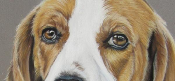 chien pastel