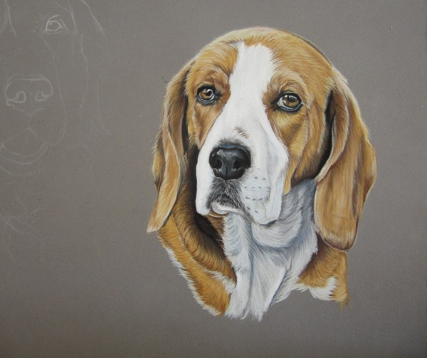 portrait beagle