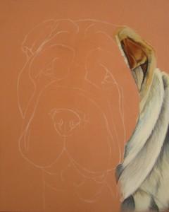 shar-pei portrait