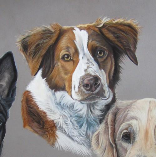 chien roux pastels