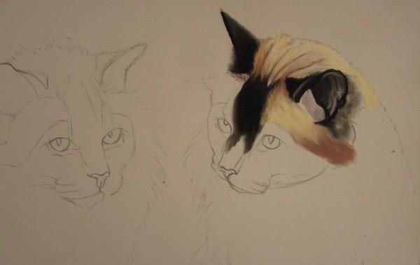 apprendre chats pastels