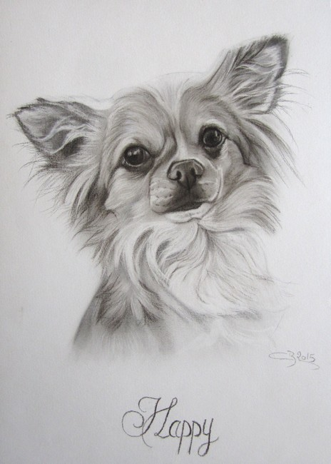 portrait chihuahua