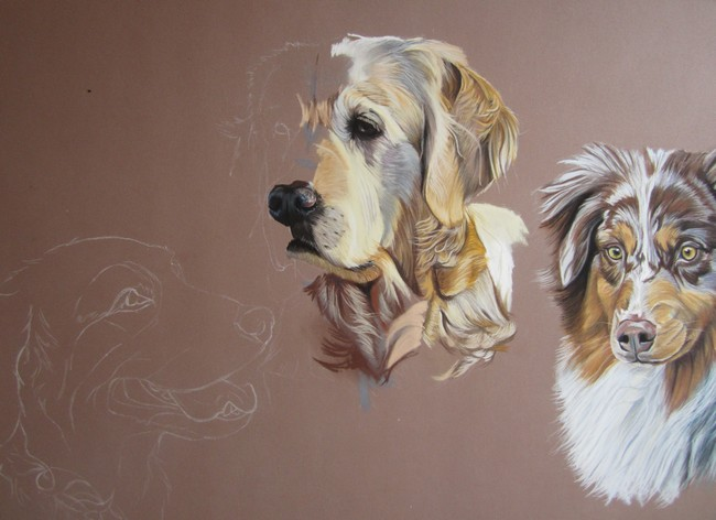 dessiner golden retriever
