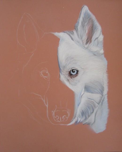 dessiner chien blanc