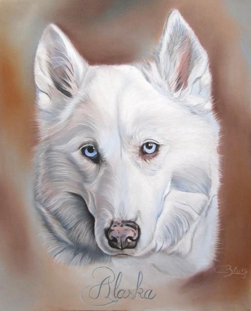 dessin husky