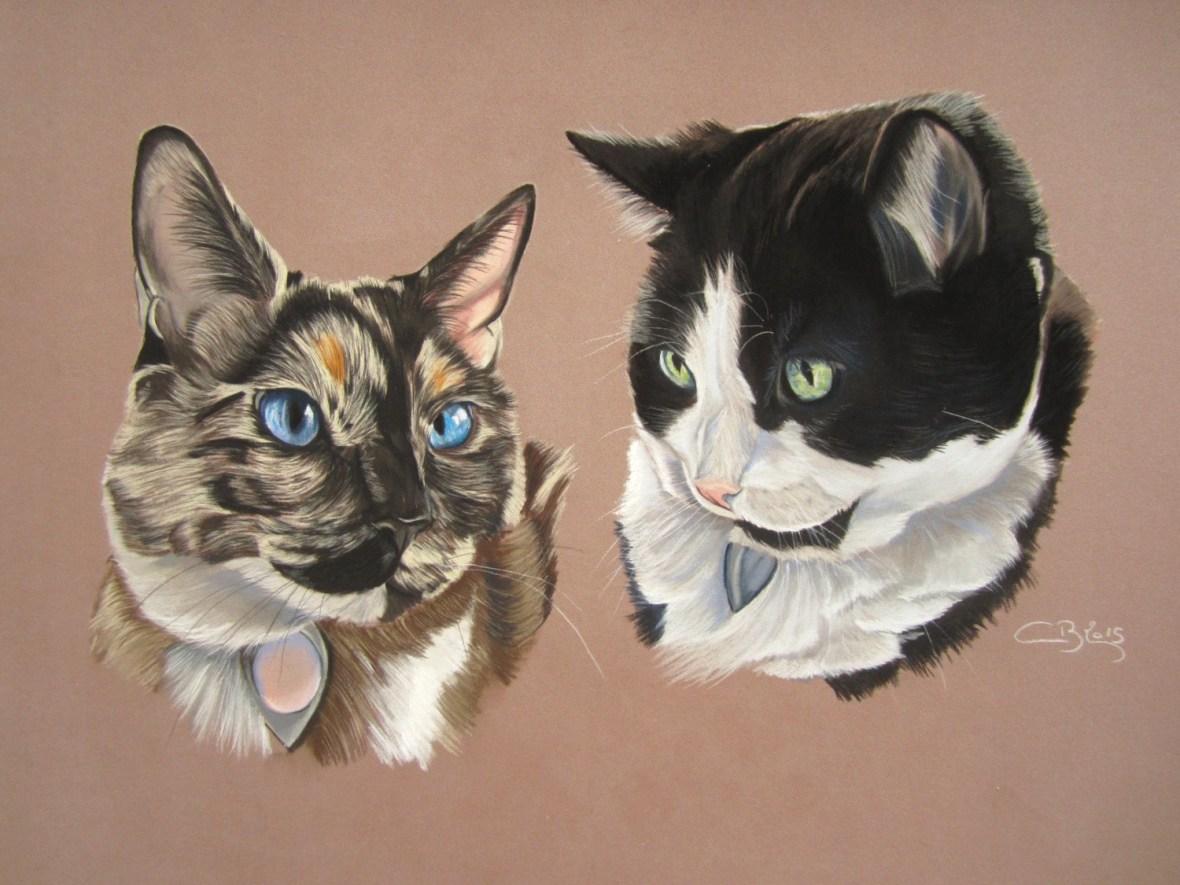 chats aux pastels secs