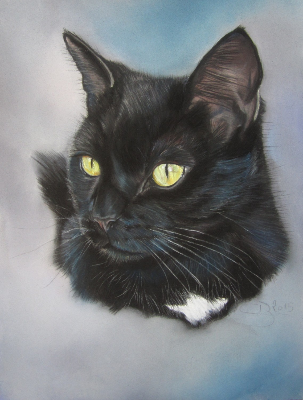 portrait chat noir